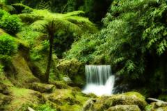 And sometimes we dream... (Joe Taruga) Tags: park parque verde green portugal water geotagged waterfall sophia gua orton azores nordeste aores cascata smiguel naturesfinest jorgecardoso ribeiradoscaldeires top2007 geo:lat=37841296 geo:lon=25267015