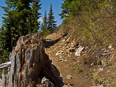 The boot path up to the top of Kendall peak begins right past where the shadow lies accross the trail. Note the dead branch on right.