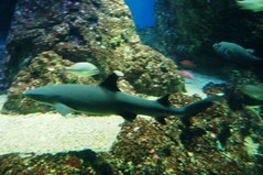 Maui Aquarium 134 (Karm2u) Tags: fish aquarium maui walker lou aquaticlife mauiaquarium karmon