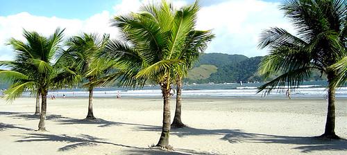 Palmstrand