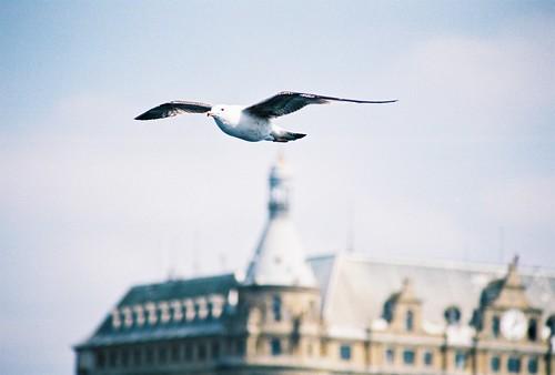Haydarpasa, Istanbul, seagull