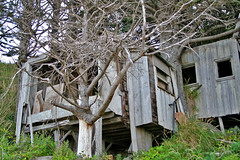 Old Beach house (dklimke) Tags: life chris sea beach rock oregon coast sand marine pacific starfish crab cannon barnacles pollack cousin anenomie