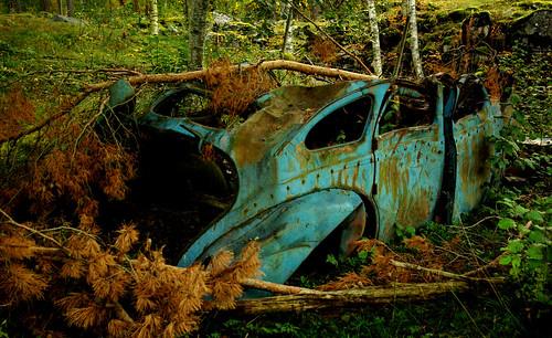 Skogsvrak inils Tags