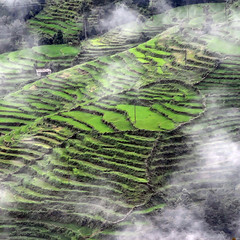 Rice Paddies (jay_kilifi) Tags: nepal green clouds rice paddy terrace himalayas blueribbonwinner