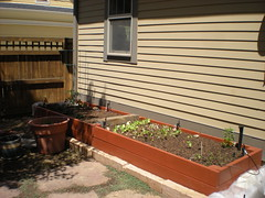 Our New Raised Bed With Veggies