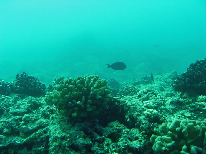 scuba diving oahu 109