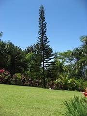 IMG_0836 (hc5duke) Tags: hawaii honeymoon gardenofeden maui hana day6