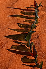 Glass shadows and tracks (claypanpete) Tags: art nature water glass landscape sand desert mud dune landschaft landart claypan naturteartkunstnaturkunst