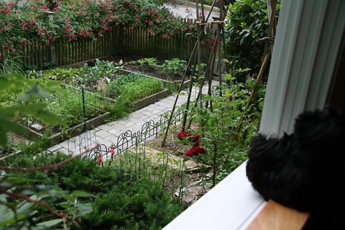 skip checks out the garden