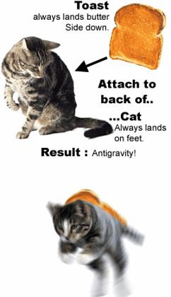 Gato antigravedad
