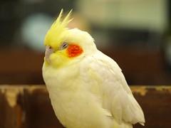 神戸花鳥園 (33)