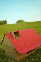 Mado's dream (EricFlickr) Tags: pet animal taiwan hamster