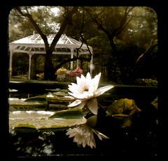Birmingham Botanical Garden Lily (J.Ruth) Tags: al birmingham alabama d100 duaflex bham ttv throughtheviewfinder