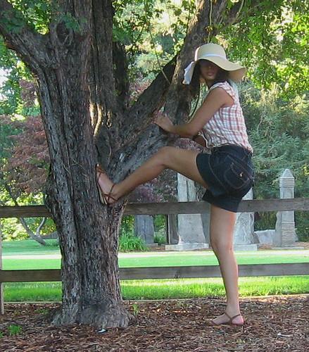 Americana with Tree