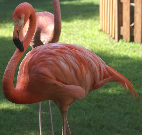 Flamingos II by reivax.