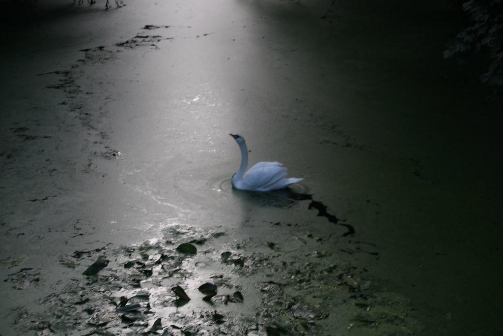 Swans Ditton Park_20070926_0005_1