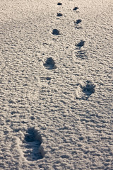 Man-made (Mark McDonald [blueelise]) Tags: snow canon footprints footprint hertfordshire 40d