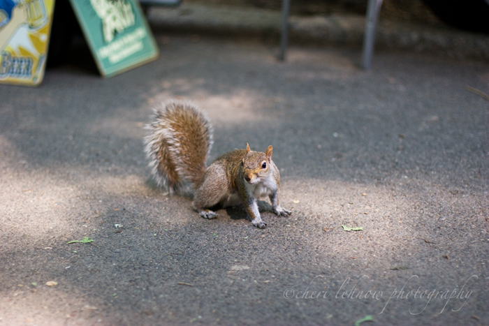 IMG_9230_squirrel.jpg