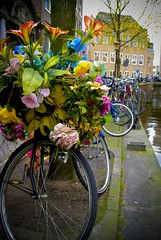 flower power bike (Andrew Greening) Tags: world street city flowers girls boy people white man flower holland green art film jes church haarlem girl amsterdam birds bike bicycle lady heineken lens hands media groen sitting colours looking sweet pierre great nederland vogels sigma bicycles fantasy blond tulip bella alkmaar choco zon hdr bloemen stad lach buiten fiets koop nachtfotografie straat gezicht kleur krant filmstar boos jongen prety sigma50mm kranten plaats youtube prinses wieler stappen gezien sigmalens moters sigma50mmf14 sigma50mm14 marktman mediamarktplein