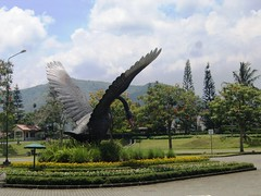 A Big, Black Swan (diamonds_in_the_soles_of_her_shoes) Tags: garden indonesia swan blackswan
