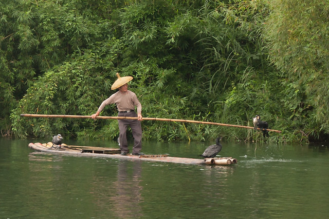 Cormorant fishing in Guilin