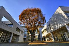 Shonan Fujisawa Campus (SFC) - Keio University (ogawa san) Tags: autumn japan    kanagawa sfc keiouniversity  shonanfujisawacampus autumnleave