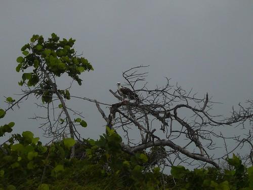 Graveyard Flat Osprey