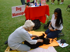 dog massage