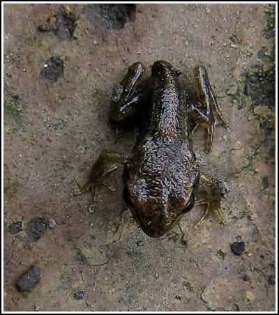 baby froggie 3 copy