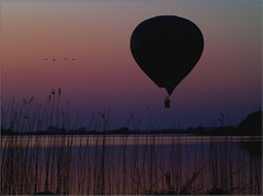 Follow the leader (Kirsten M Lentoft) Tags: sunset lake water birds topc25 denmark ballon balloon soe rightplacerighttime notmybest outstandingshots arresø anawesomeshot colorphotoaward momse2600 superbmasterpiece flickrphotoaward foundanoldie kirstenmlentoft