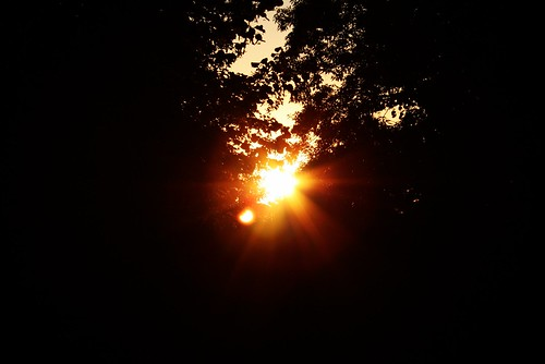 Sunlight = Life On Earth | Flickr - Photo Sharing!