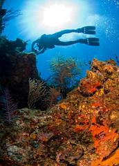 reefdvr7756pcw (gerb) Tags: silhouette topv111 coral 1025fav 510fav cool topv555 topv333 underwater topv1111 topv999 scuba fv5 topv777 diver d200 reef artphoto aquatica 105mmf28gfisheye 3waychallenge 3wc tvx 3w5 kuwaitphoto kuwaitartphoto kuwaitart