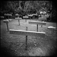 Dog Cemetery - by jonnyphoto