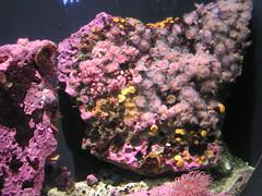 Coral (Sanjin) Tags: coral montereyaquarium