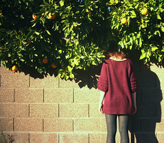 (self spirit soul) Tags: shadow portrait orange tree brick wall self back hide hiding imnotthere