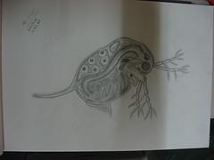Water Flea (abukhalil8) Tags: sea water drawing flea abu khalil   abukhalil