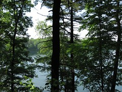 walden pond - by mo pie