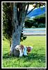 Cão na hora H ! (crenan) Tags: dog cão me d50 interesting nikon calendar photos fast explore cachorro santamaria score cachorrinho blueribbonwinner d80 scoremefast câmeradeourobrasil crenan grupo1a10brasil visãofotográfica carlosrenanpiressantos