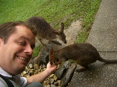 Feeding A Wallaby!