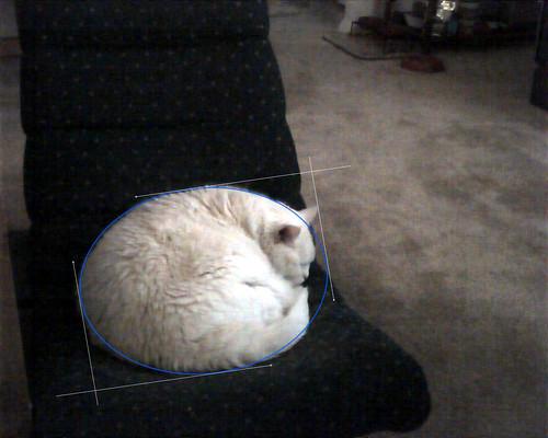 Round Cat is Round