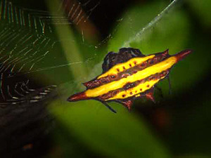 619305687 64e59fbdd3 Photogenic Caterpillars and Other Fascinating Insects of the Thai Forest