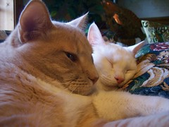 Do Not Disturb the Kitties (Gail S) Tags: pinky thepuss catswindows