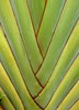 (deanna.f) Tags: green nature dominicanrepublic palm palmtree republicadominicana laromana casadecampo g7 2pair canong7 ccmppattern