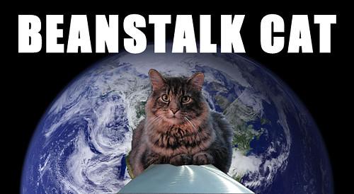 Beanstalk Cat