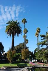 Clive Square (Viajante) Tags: park newzealand tree napier clivesquare