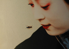 Glance (LOOKING  S I D E W A Y S) Tags: red portrait japan bug insect book nikon artist ant cover geisha dcist kimono gaze crawl glance attraction formicidae minekoiwasaki geishaalife