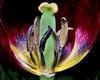 ~ Inner Glory ~ (ViaMoi) Tags: canada 20d festival canon video ottawa adapter tulip digitalcameraclub mywinners abigfave platinumphoto theunforgettablepictures viamoi goldstaraward customflash 200mmefsusm 100commentgroup dragondaggerphoto