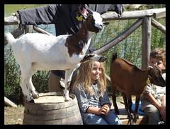 """....le caprette ti fanno ciao..... (Gianpietro """" torebue"""" Migheli) Tags: heidi capra saluto oltremare torebue"""