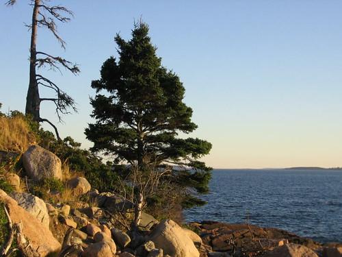 Pine Tree State