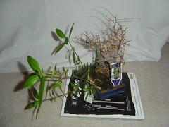My Dead Plants (2)